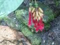 Květ[2]